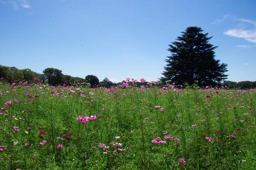昭和記念公園201109-17