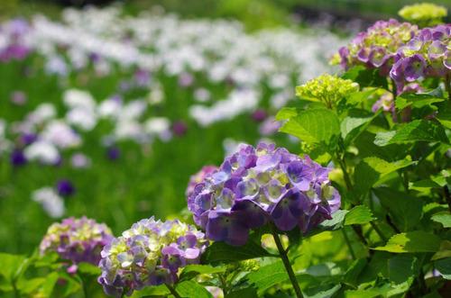 昭和記念公園201206-7