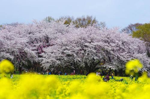 昭和記念公園201404-5