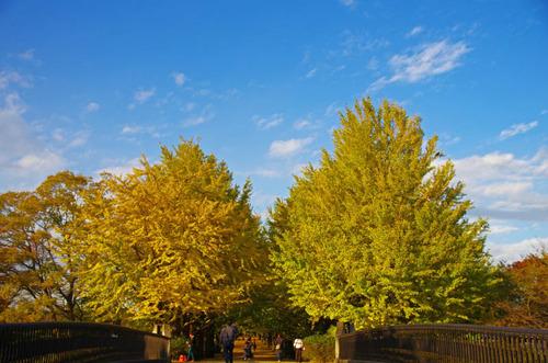 昭和記念公園201311-1