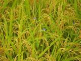 秋の草花-5