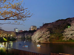 千鳥ヶ淵夜桜-6S