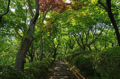 京王百草園201305-4