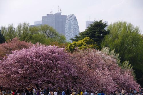 新宿御苑201104-8