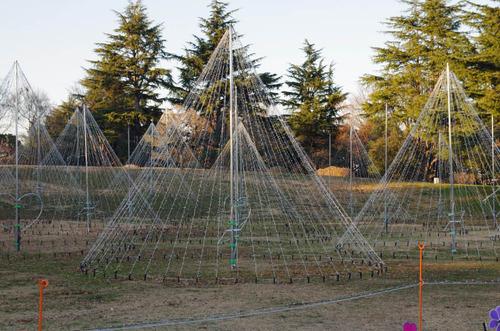 昭和記念公園201312−5