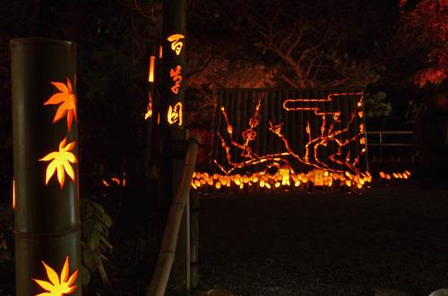 百草園紅葉ライトアップ201211-11