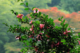 秋の百草園200911-4