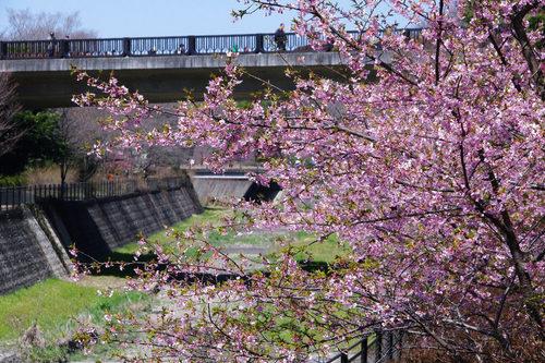昭和記念公園20100314-17