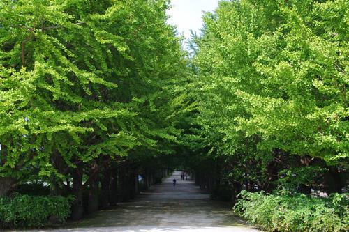 昭和記念公園201009-1