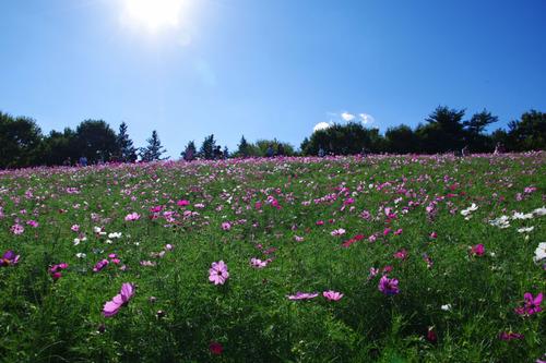 昭和記念公園201010-6