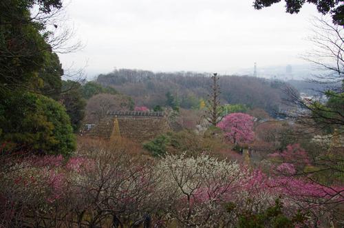 京王百草園201203-4