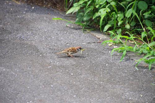 散歩道の鳥たち2013-13