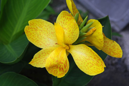 散歩道の花201006-10