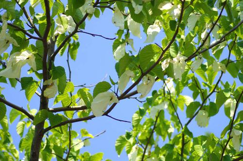 神代植物公園201305-5