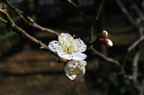 百草園20100130-9