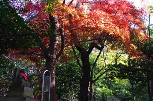 高幡不動尊201011-2
