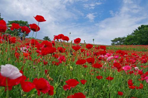 昭和記念公園201305-2