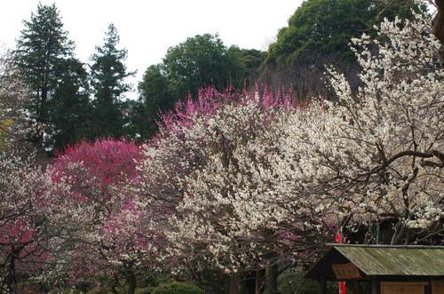 京王百草園201503-5