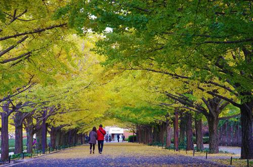 昭和記念公園201311-11