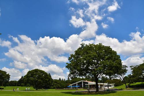 昭和記念公園201607-1