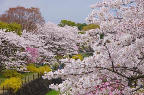 昭和記念公園201404-16