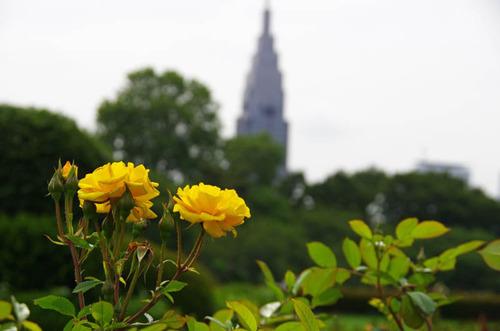 新宿御苑201206-6