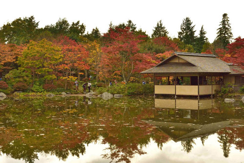 昭和記念公園201511-3