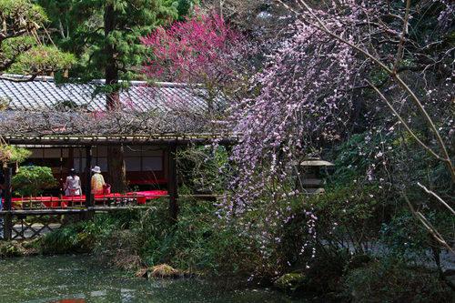 百草園梅まつり201003-7