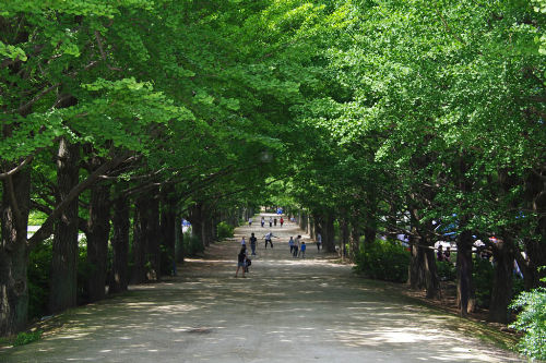 昭和記念公園201006-17