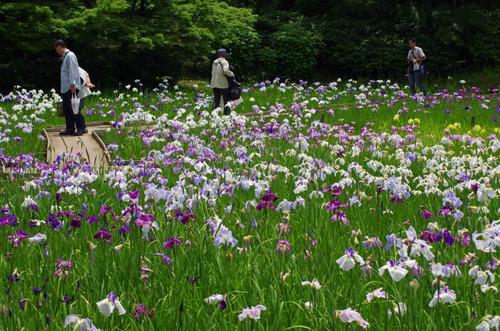 昭和記念公園201206-8