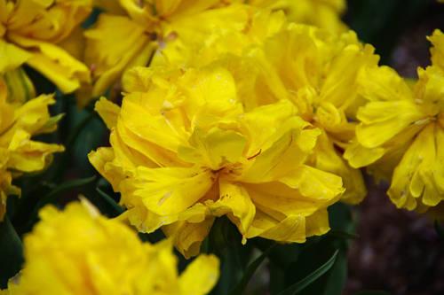 昭和記念公園の花201004-4