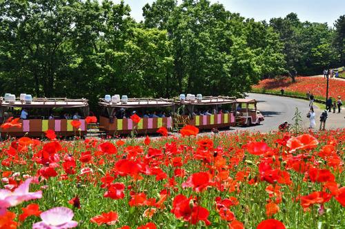 昭和記念公園201705