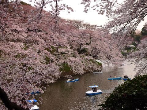 千鳥ヶ淵夜桜-2