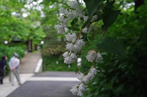 高幡不動尊20100529-2