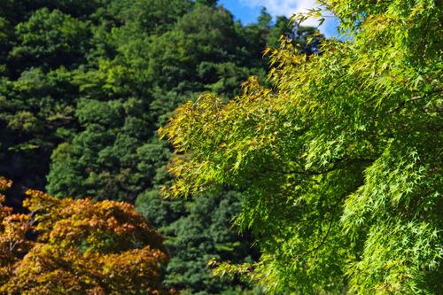 道志キャンプ201009-13