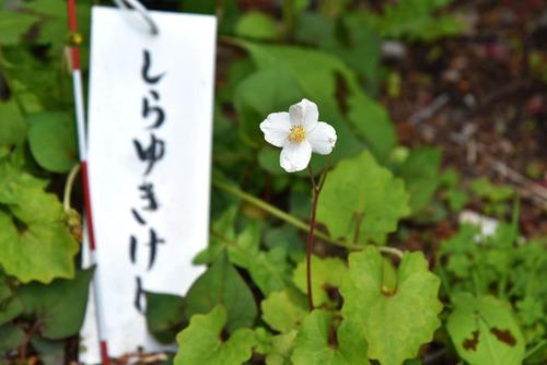 高幡不動尊201604-4