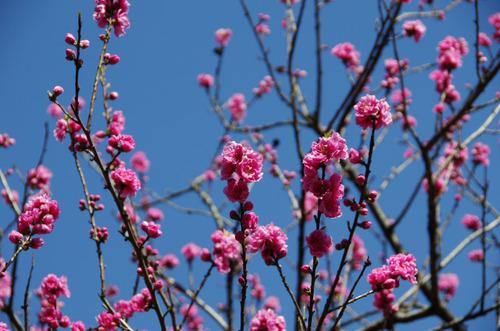 昭和記念公園201103-4
