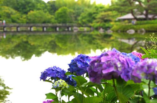 昭和記念公園201306-11