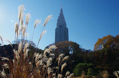 新宿御苑201312-11