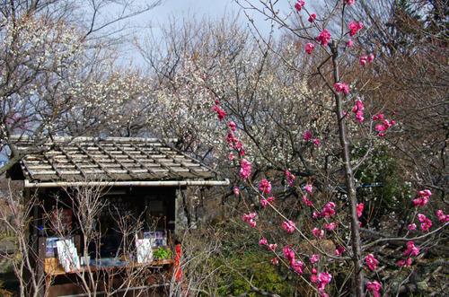 京王百草園201101-4