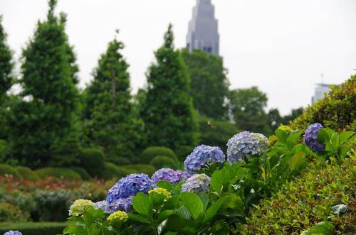 新宿御苑201206-5