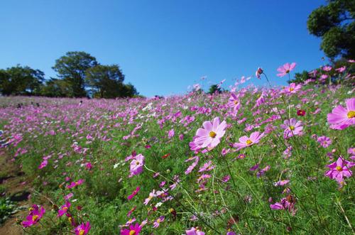 昭和記念公園201310-7