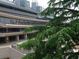 東京競馬場0908-14
