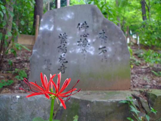 高幡不動噂20090919-7