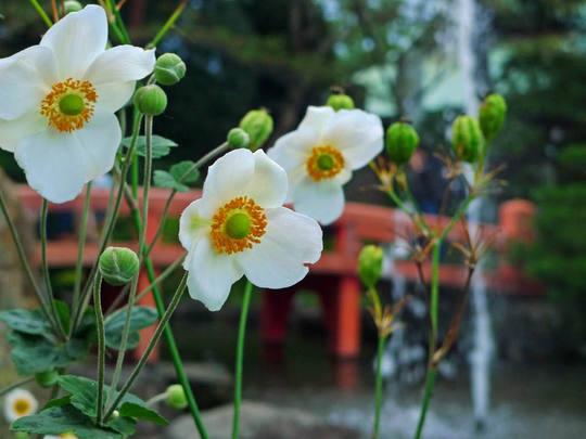 高幡不動尊20091003-8