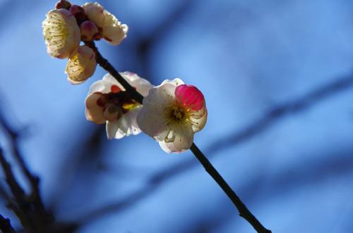 京王百草園201103-2