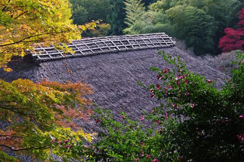 百草園紅葉201011-5