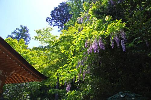 高幡不動201304-12