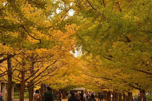 昭和記念公園201511-7