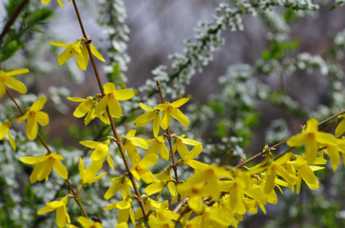 京王百草園201104-10